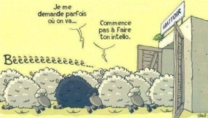 moutons-abbattoir