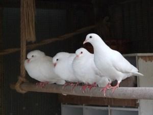 Les événements les plus importants arrivent sur des pattes de colombe
